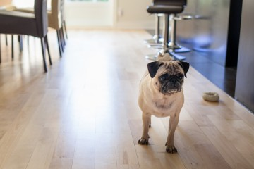 Top 10 Best Apartment Dogs