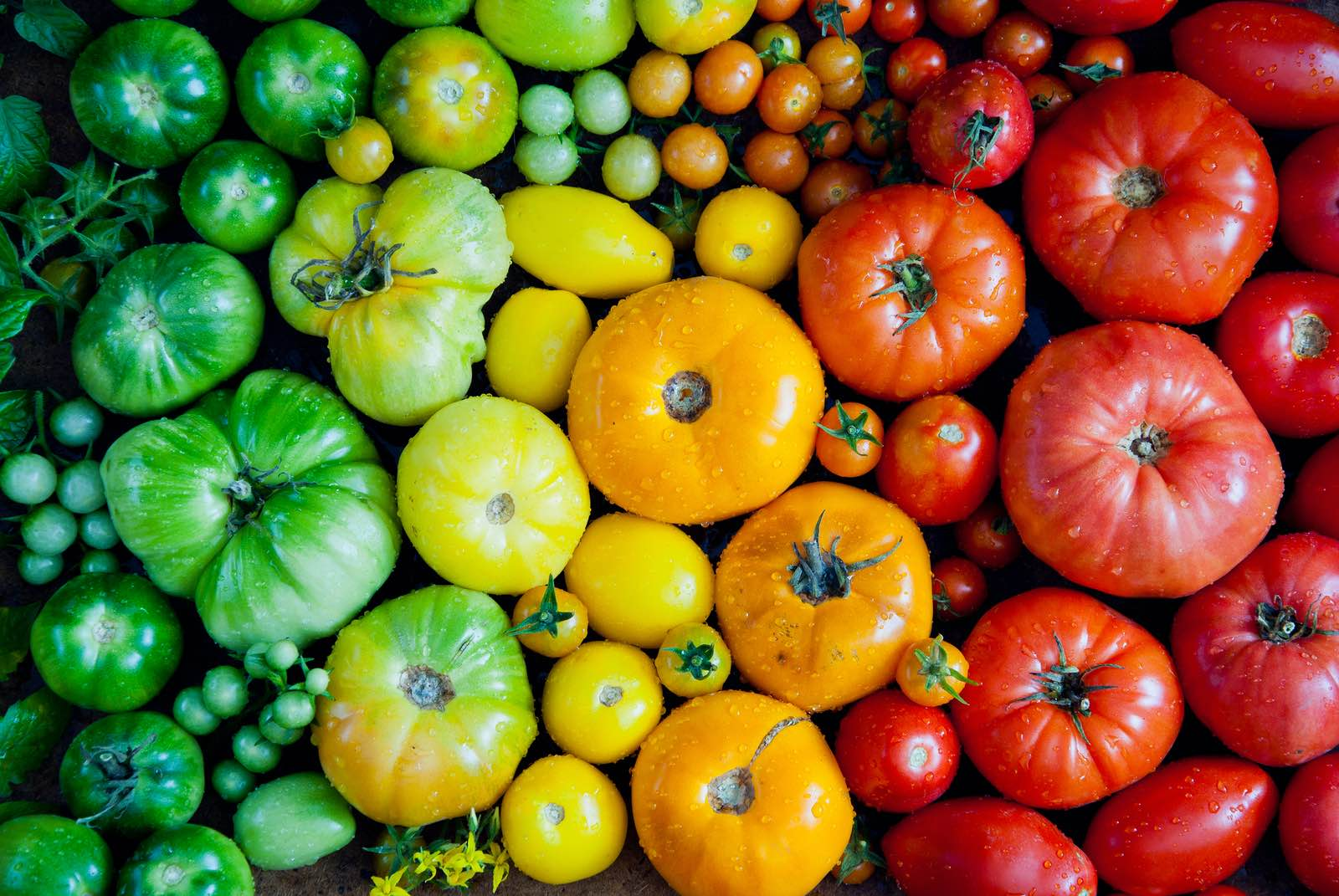 Farmer's Markets in Boston: A Different Way to Shop