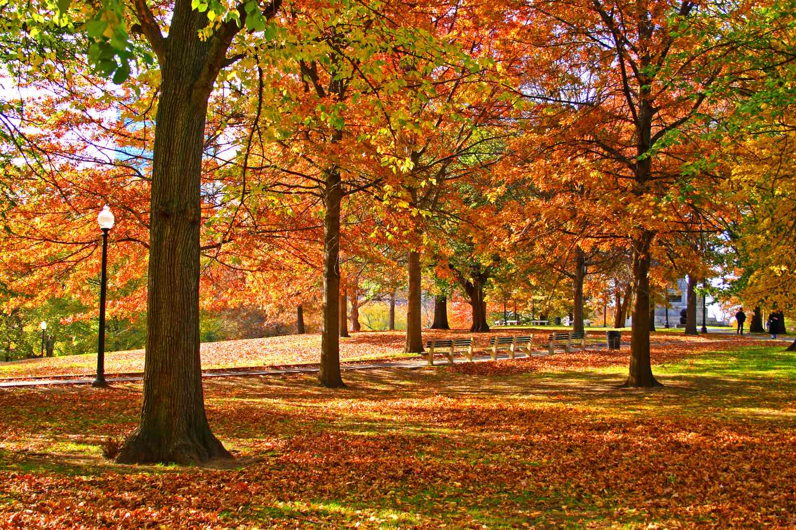 Autumn at One Greenway: Hot Spots for Fall Foliage
