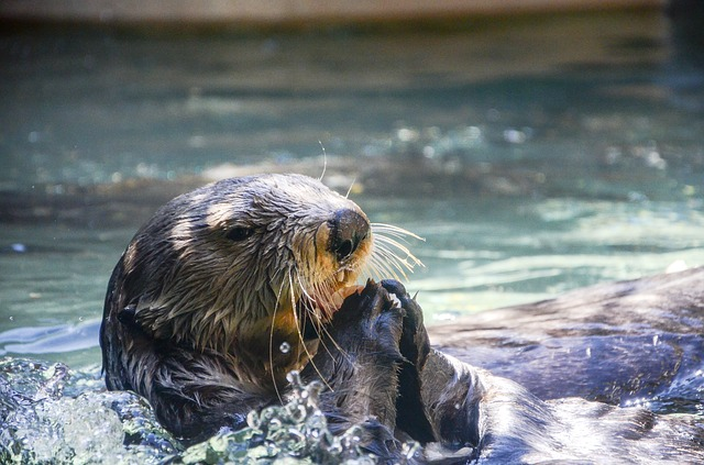 Meet the Animals at the Franklin Park Zoo