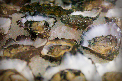 Regionally Sourced Seafood Shines on the Menu at Boston's New North Square Oyster